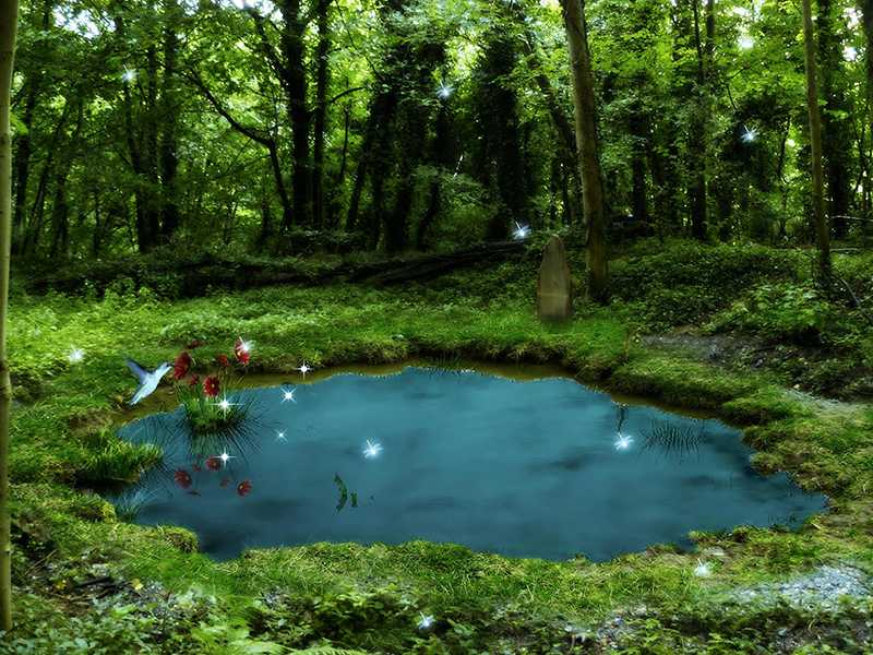 124 1249448 free pond wallpaper data src most popular pond