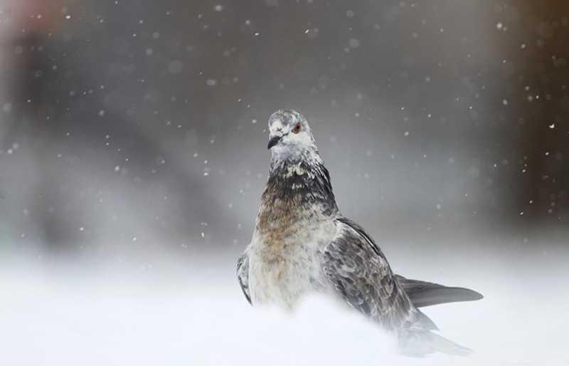 1484006 2048x1315 pigeon