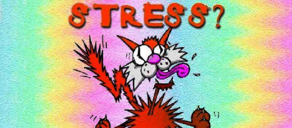 488696 1024x768 STRESS