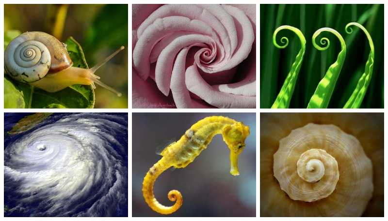 Fibonacci spirals collage
