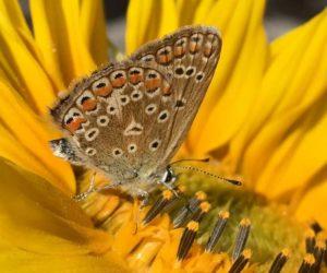 Motýl od Bosorky