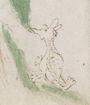 Voynich Manuscript 50 detail dragon