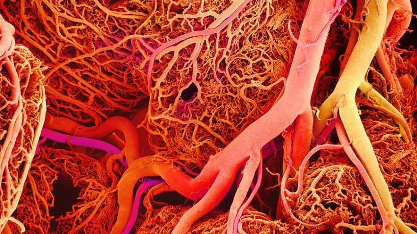 blood vessels sem 1ykwp1o