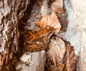 žabí princ od Bosorky